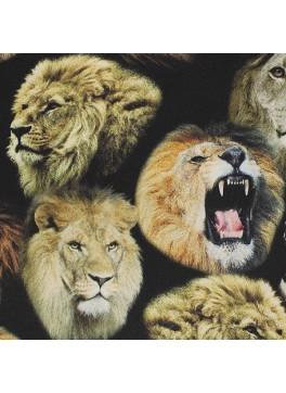 Lions (SV700589)